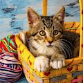 Kitten In Yellow Basket With Yarn by Garry Gay