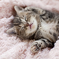 Kitten Sleeping On Towel by C.o.t/a.collectionrf