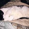 Kitty Kitty by Reagen Guthrie