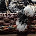 Kitty Paws by Karen Slagle