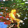 Koi Pond Fish - Colorful Surprises - By Omaste Witkowski by Omaste Witkowski