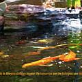 Koi Pond Fish - Limitless Possibilities - By Omaste Witkowski by Omaste Witkowski