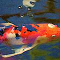 Koi Pond Fish - Painted Dreams - By Omaste Witkowski by Omaste Witkowski