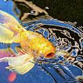 Koi Pond Fish - Pretty Pucker - By Omaste Witkowski by Omaste Witkowski