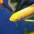 Koi Pond Fish - Taking Aim - By Omaste Witkowski by Omaste Witkowski