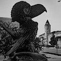 Ku Jayhawk And Lawrence Kansas Campus Architecture Black And White by Gregory Ballos