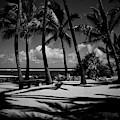 Kuau Beach Palm Trees Paia Maui Hawaii by Sharon Mau