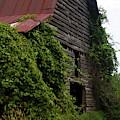 Kudzu Barn 2 by Cathy Lindsey