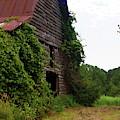 Kudzu Barn 3 by Cathy Lindsey