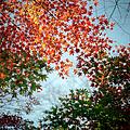 Kuhonbutsu In Autumn by Haribote.nobody