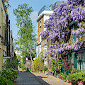 Kynance Mews Wisteria by Tim Gainey