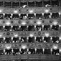 La Fenice by Erich Auerbach