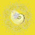 Lacy Look Shell by Rosalie Scanlon
