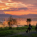 Lake Chapala Sunset And Horses by Dane Strom