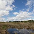 Lake Lizzie Marsh by Paul Rebmann