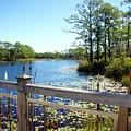 Lake View by Megan Cohen