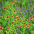Late Spring Bloomers In The Hill Country - Vertical by Lynn Bauer