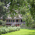 Laura Plantation by Susan Rissi Tregoning