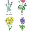 Lavender Lotus Daffodils Hyacinth Botanical Watercolor by Irina Sztukowski