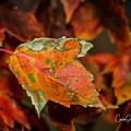Leaf by Connie Allen