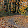 Leaf Covered Road by Scott Lyons