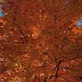 Leaves Of Fire by Lora J Wilson