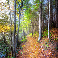 Leaves On The Trail by Debra and Dave Vanderlaan