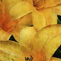Lemon Orange 3704 Idp_2 by Steven Ward