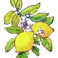 Lemons by Dan Nelson