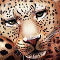 Leopard Resting by Angela Murdock