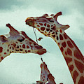 Lets Share - Giraffe - Painting by Ericamaxine Price