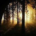 Light In The Woods by Brent Short