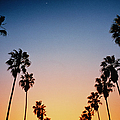 Lines Of Palm Trees At Sunset San by Christian Michaels