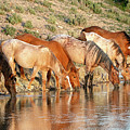 Lineup At The Pond-- Wild Horses by Judi Dressler