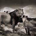 Lion Family by Christine Sponchia