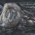 Lion In Dappled Shade by John Neeve
