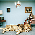 Lion Lying On Rug, Mature Woman Knitting by Matthias Clamer