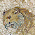 Lion Mosaic In The Ruins Of A Villa  by Steve Estvanik