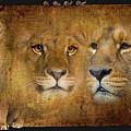 Lions No 02 by iMia dEsigN