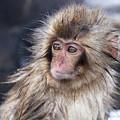 Little Snow Monkey At The Jigokudani by Ayusloth