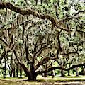 Live Oak Number 153 by Kathy K McClellan