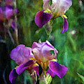 Lively 6824 Idp_2 by Steven Ward