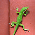 Lizard On Mauve In The Jekyll Island Historic District by Bruce Gourley