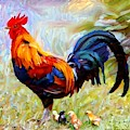 Local Chickens by Carl Gouveia