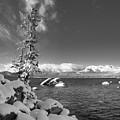 Lone Tahoe Tree by Martin Gollery
