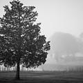Lone Tree Taunton River II Bw by David Gordon