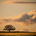 Lonely Silhouette by Jeff Phillippi