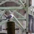 Lonesome Gull by Jean Noren
