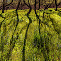 Long Shadows In Springtime by Debra and Dave Vanderlaan