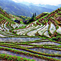 Lonji Rice Terraces by Rick Lawler